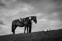 Hochzeit mit Pferd und Hund, Gurten, Bern.